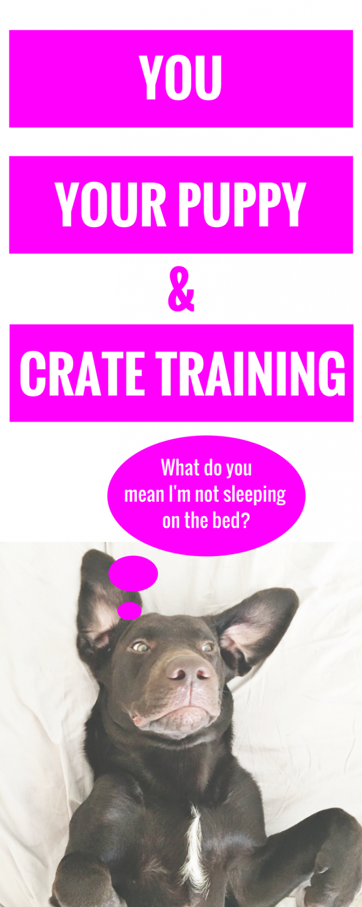 You, Your Puppy + Crate Training