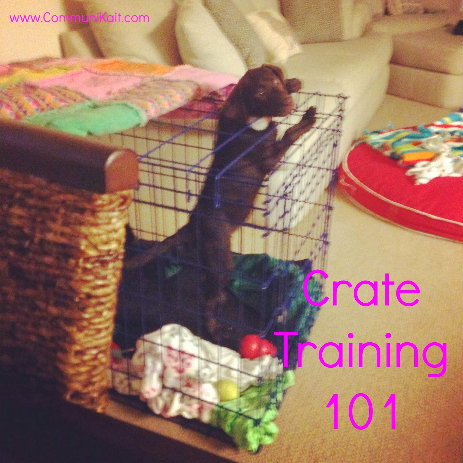 how to crate train your puppy when you work