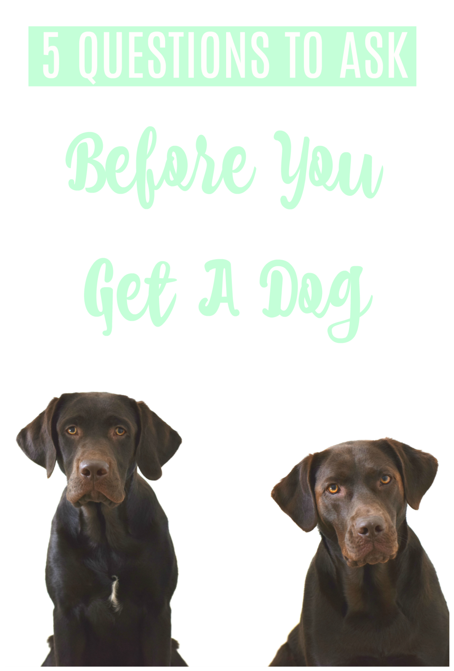 5 Questions To Ask Before You Get A Dog - How to pick a dog breed - Best Family Dogs - Dog Training - Puppy Training - Communikait by Kait Hanson