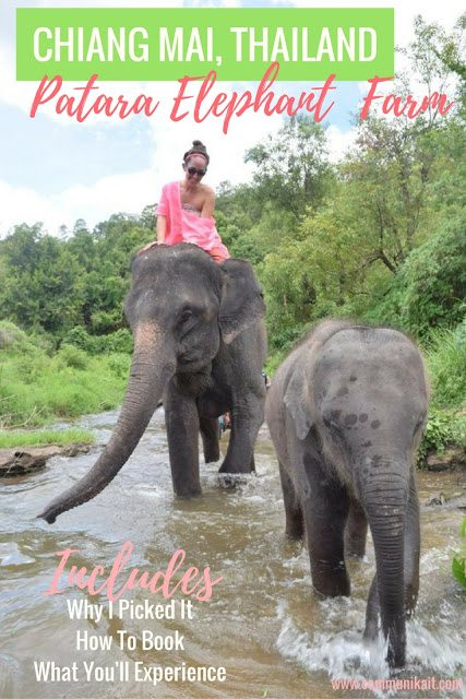 Our Day At Patara Elephant Farm In Chiang Mai Thailand