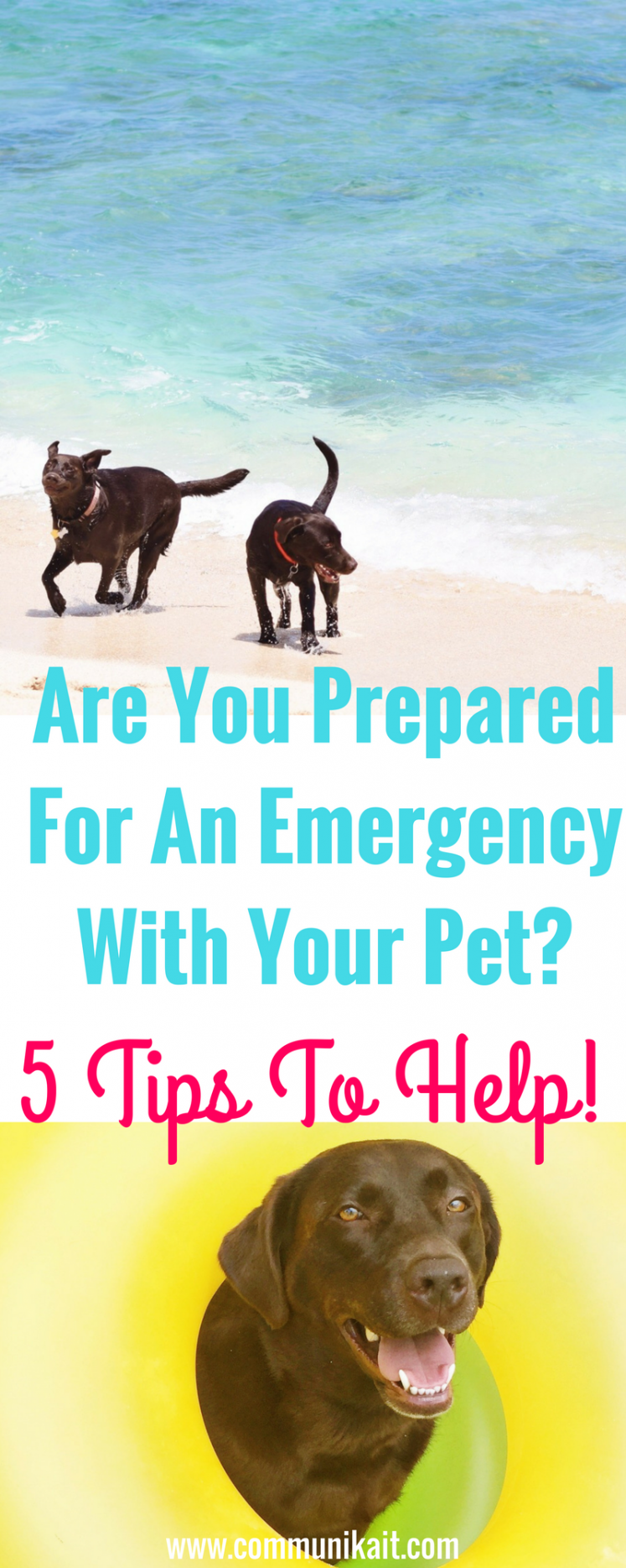 Are You Prepared For An Emergency With Your Pet?