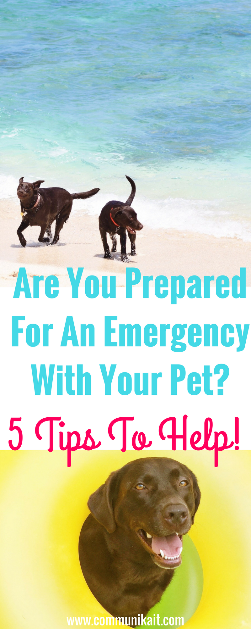 Are You Prepared For An Emergency With Your Pet? - Tips For Pets - Puppy Tips - Life Hacks For Dogs - Puppy Tips - Dog Care - Communikait by Kait Hanson - Chocolate Labrador