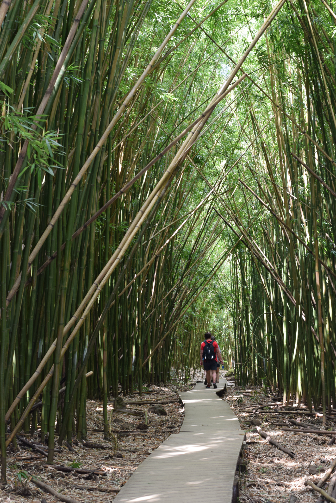 Bamboo Forest - Pipiwai Trail - How To Spend 48 Hours On Maui