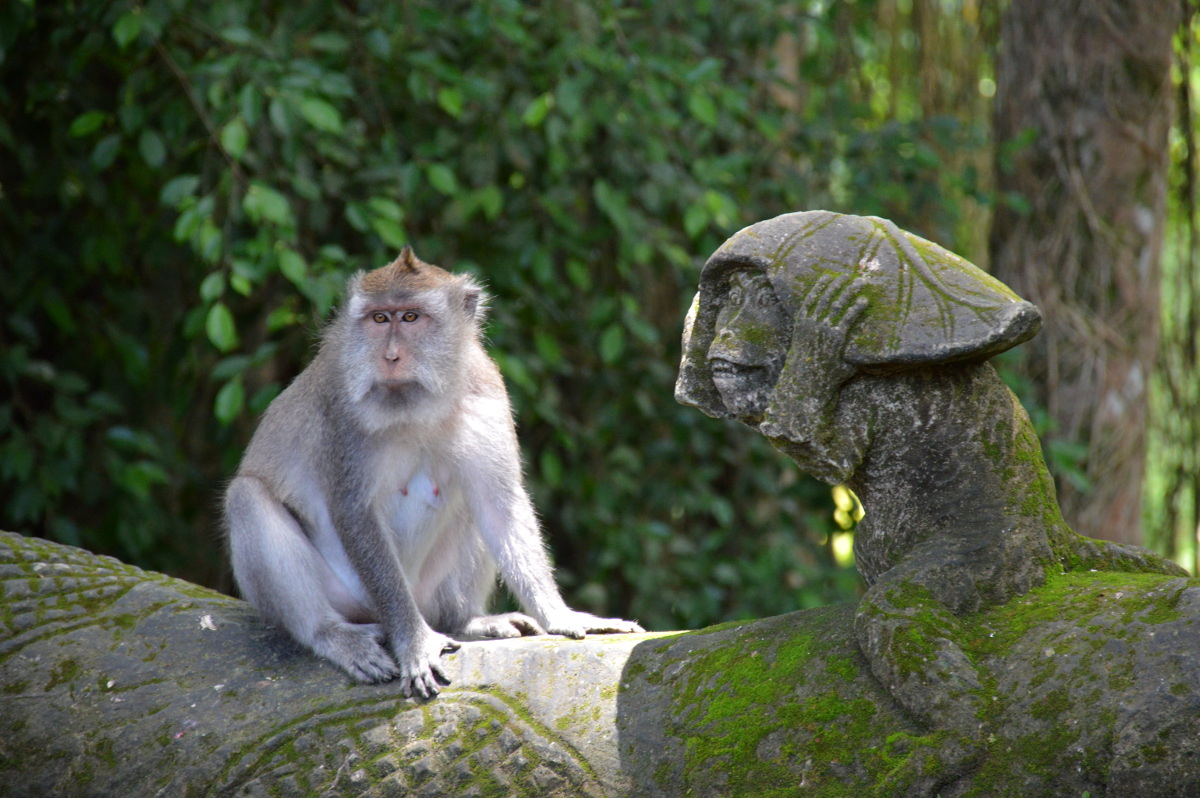 Ubud Monkey Forest - Bali Bucket List - CommuniKait