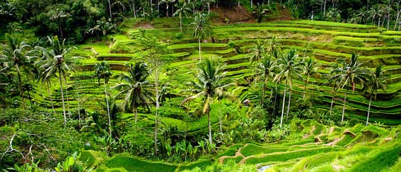 Ubud Rice Terraces - Bali Bucket List - CommuniKait