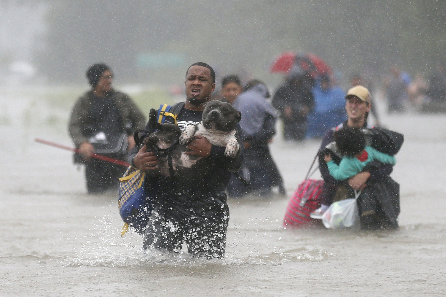 Keeping Your Pet Safe During Natural Disasters - Communikait by Kait Hanson
