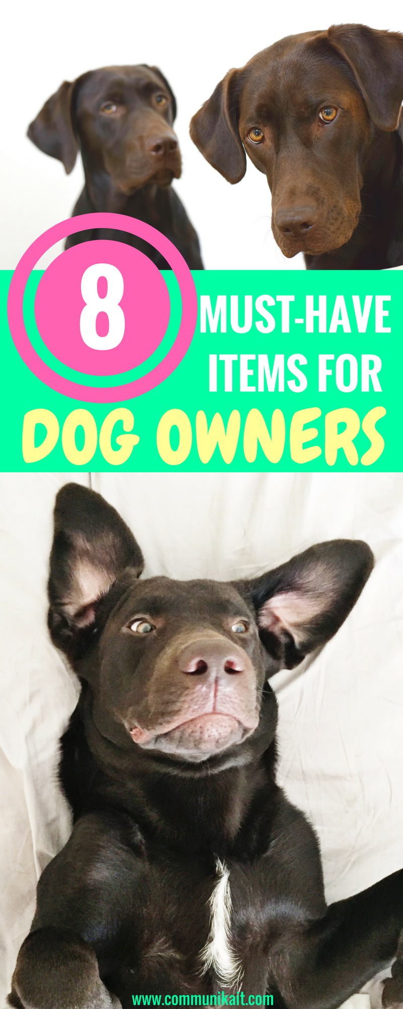 8 Essentials For Dog Owners - Life Hacks For Dog Owners - Tips For Pets - Puppy Tips - Life Hacks For Dogs - Puppy Tips - Dog Care - Communikait by Kait Hanson - Chocolate Labrador