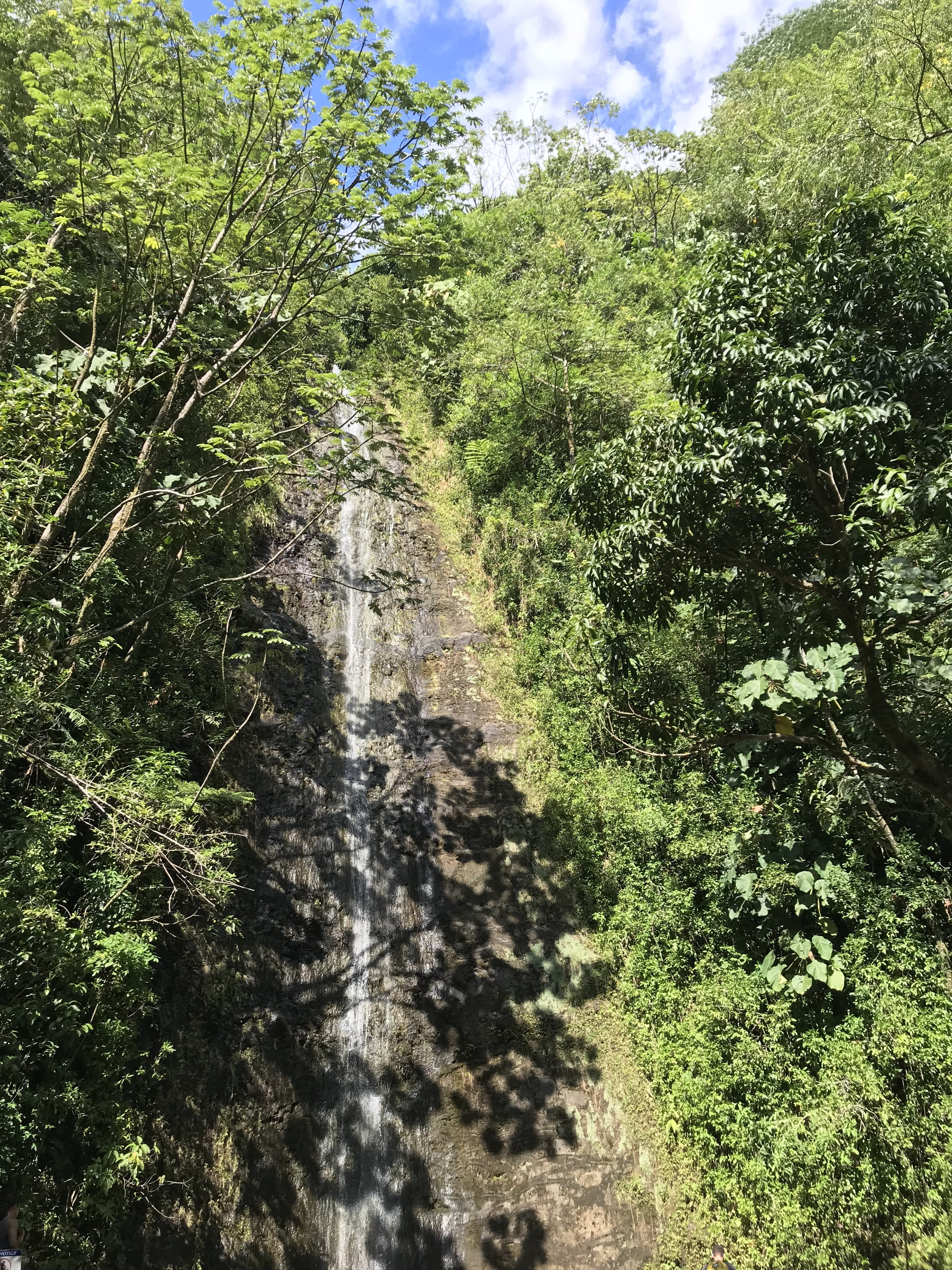 Hiking In Hawaii: Manoa Falls - Manoa Falls Hike - Is Manoa Falls Easy - Manoa Falls Kid Friendly - Manoa Falls Oahu - Manoa Falls Hours - Manoa Falls Trail Oahu - Manoa Falls Hike - Oahu Hikes - Best Oahu Hikes - Short Oahu Hikes - Easy Hawaii Hikes - #oahu #manoafalls #hawaii #hiking