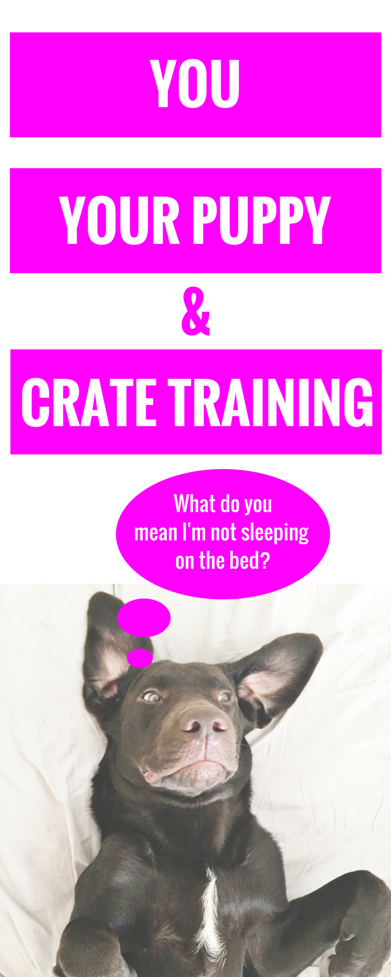 You, Your Puppy + Crate Training - Puppy Tips - Tips for pet owners - new puppy tips - crate training tips - crate training 101 - helpful tips for new pet owners - Communikait by Kait Hanson