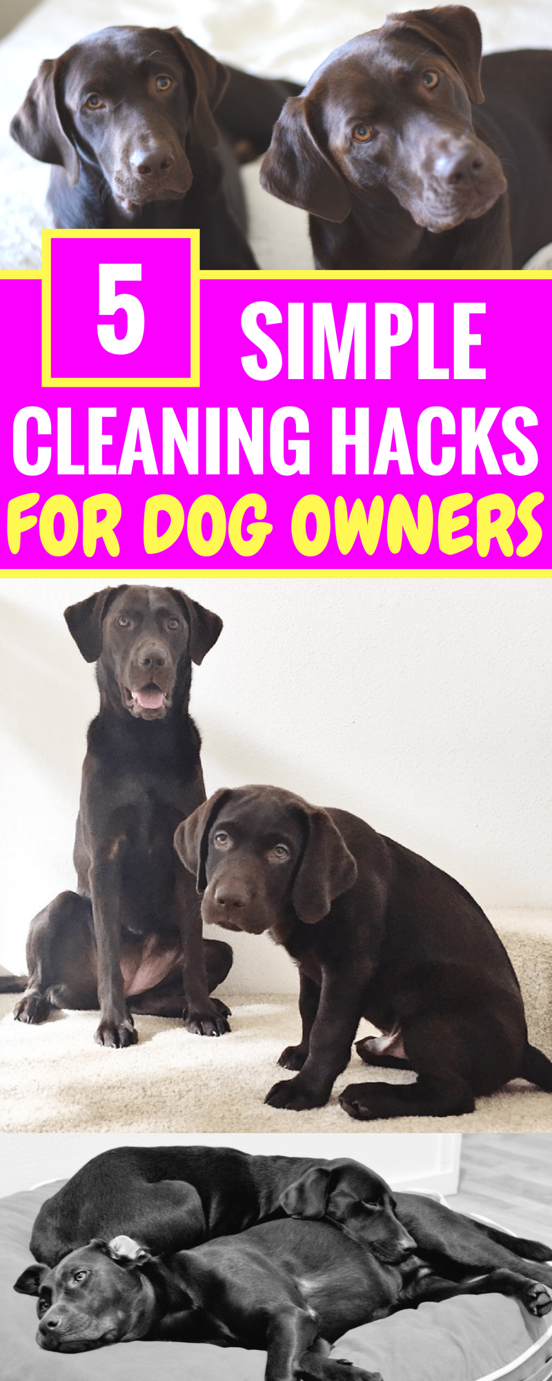 5 Simple Cleaning Hacks For Dog Owners - How I keep my house clean with two dogs - Life Hacks For Pet Owners - Cleaning Tips - Tips For Pet Owners - House Cleaning Tips - Chocolate Labradors - Communikait by Kait Hanson
