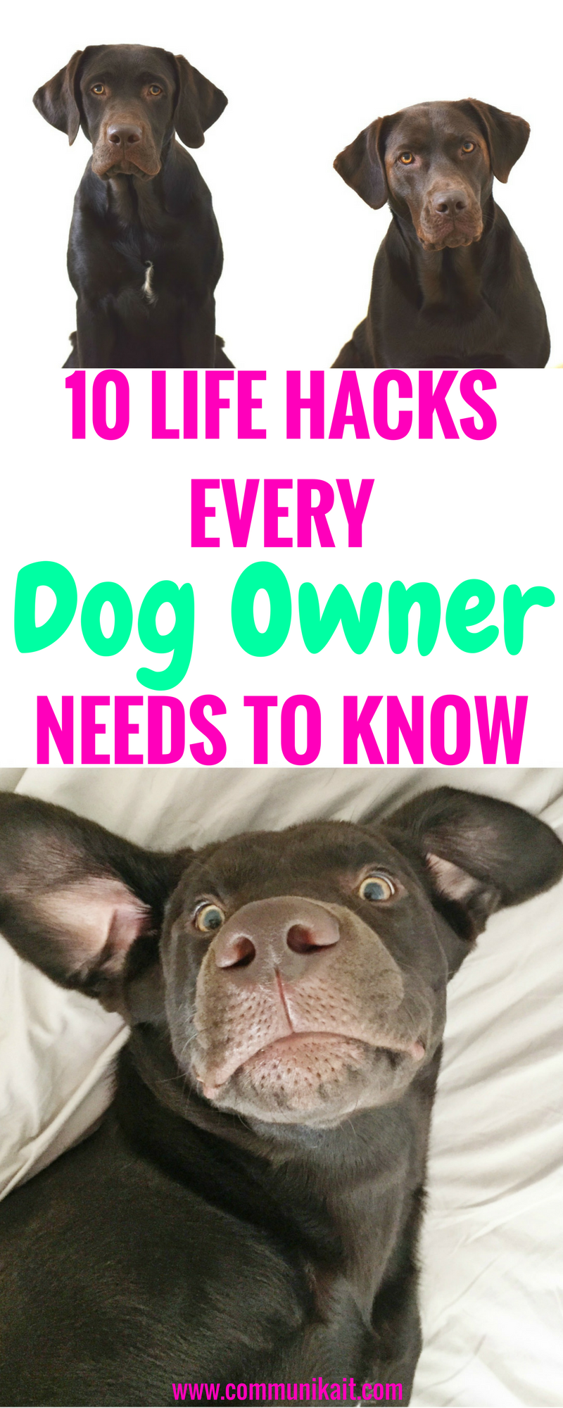 10 Life Hacks For Dog Owners - Tips For Pets - Puppy Tips - Life Hacks For Dogs - Puppy Tips - Dog Care - Communikait by Kait Hanson - Chocolate Labrador