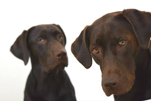 Your Dog Questions: Answered