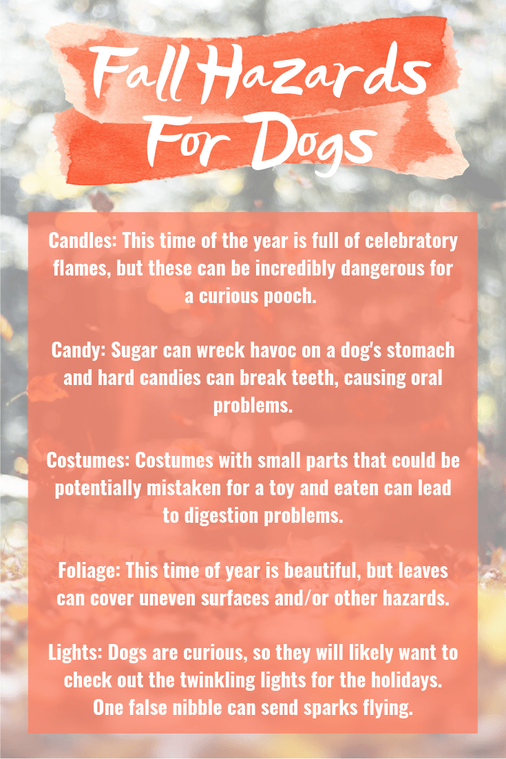 Fall Hazards For Dogs - A quick reference sheet to help you and your pooch stay out of harm's way this fall! | Fall Hazards For Dogs - Pet Hazards - Safety Tips For Pets - Communikait by Kait Hanson