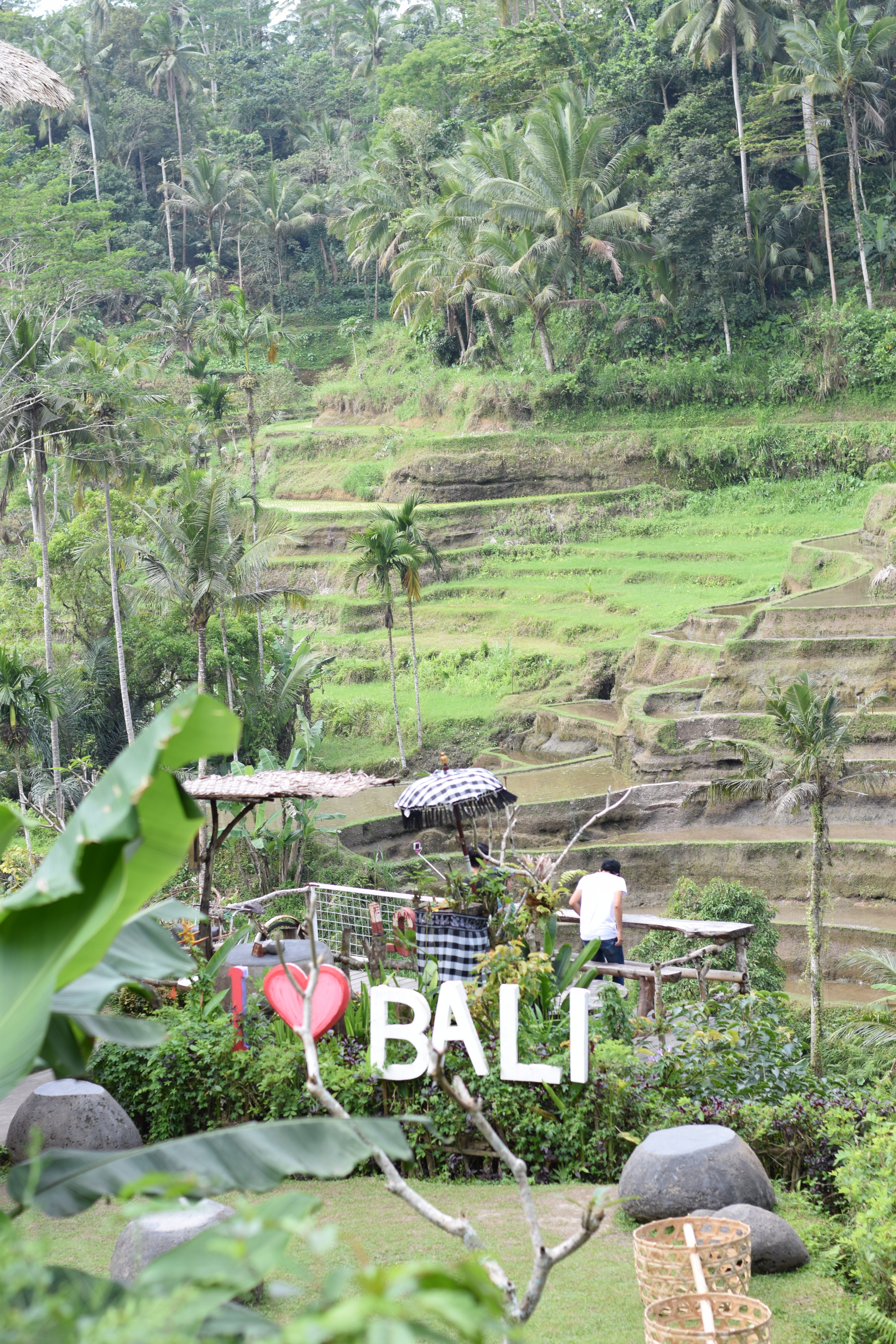 Tegallalang Rice Terrace - Ubud, Bali, Indonesia - Our Bali Trip - Communikait