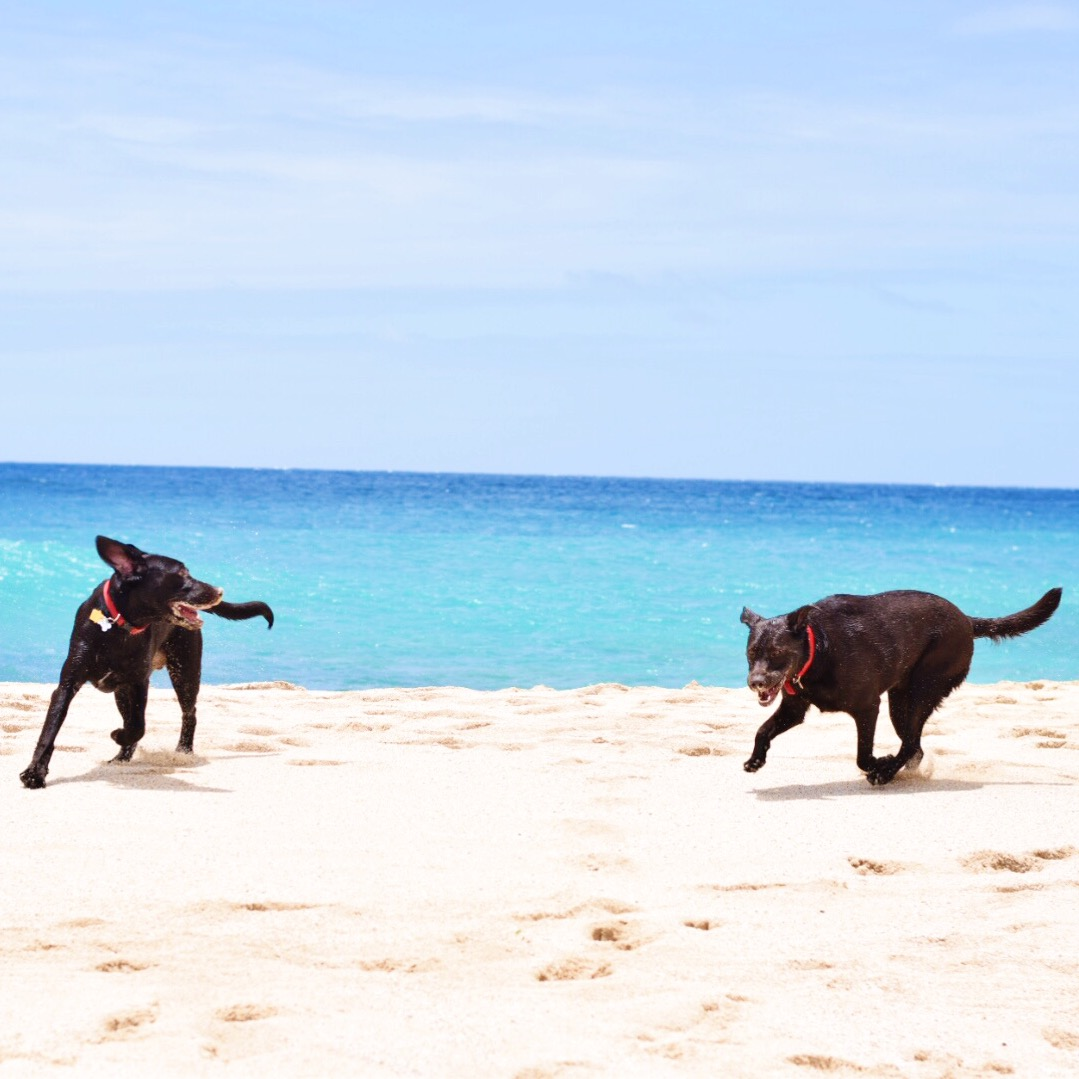 What Do You Do With The Dogs When You Travel? - Rover.com - Communikait