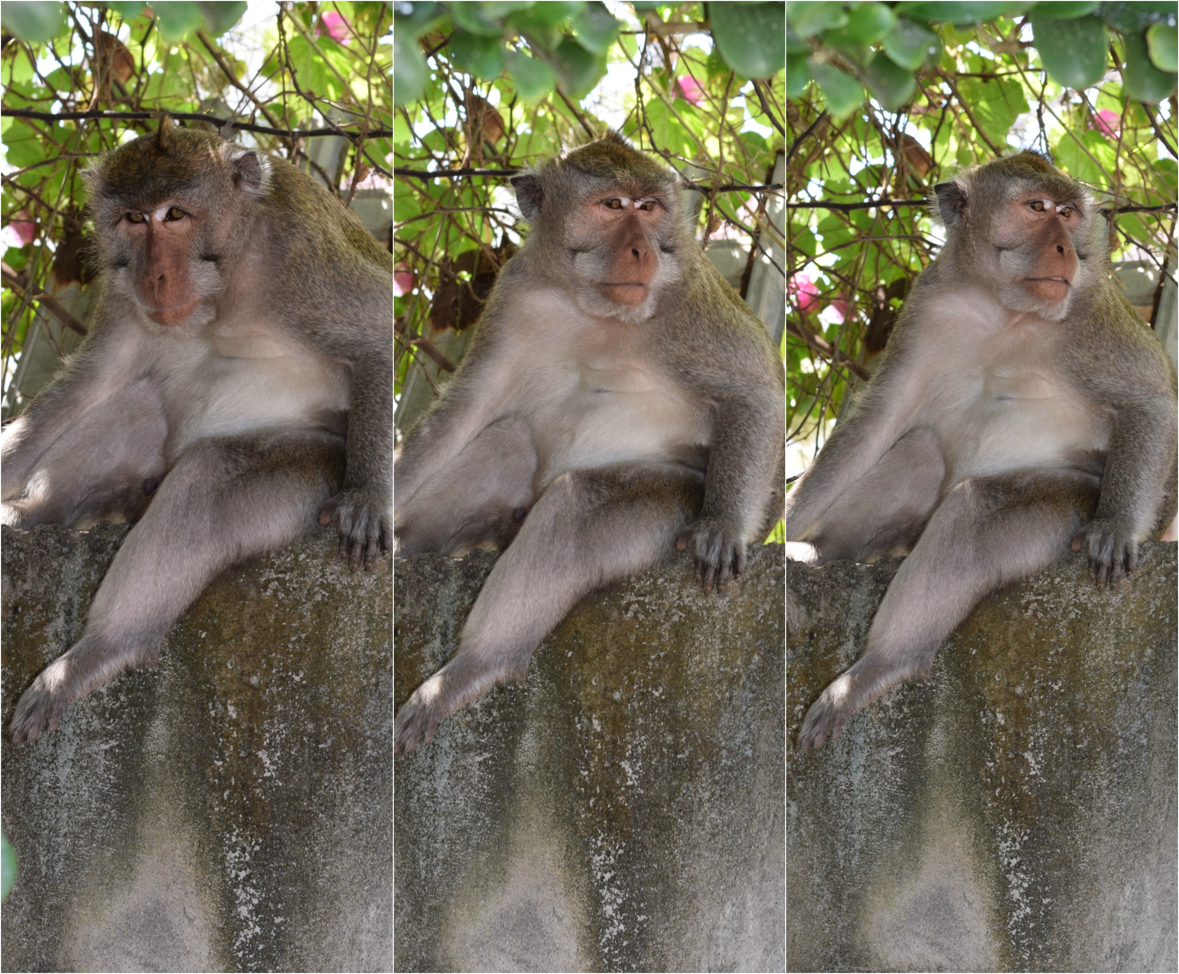 Monkey Trio - Uluwatu Temple - Bali, Indonesia - Our Bali Trip - Communikait