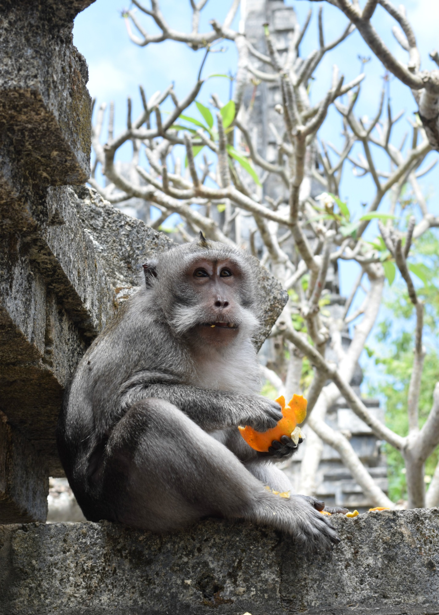 Monkey Eating - Uluwatu Temple - Bali, Indonesia - Our Bali Trip - Communikait