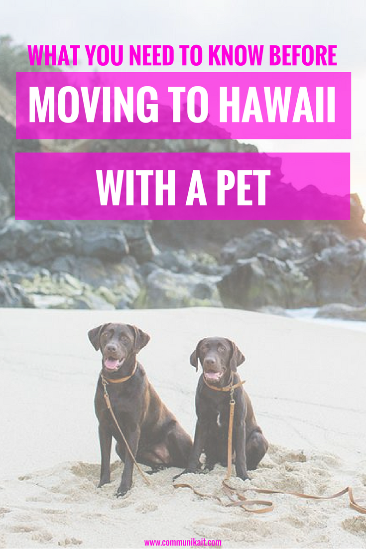 Moving To Hawaii With A Pet: What You Need To Know