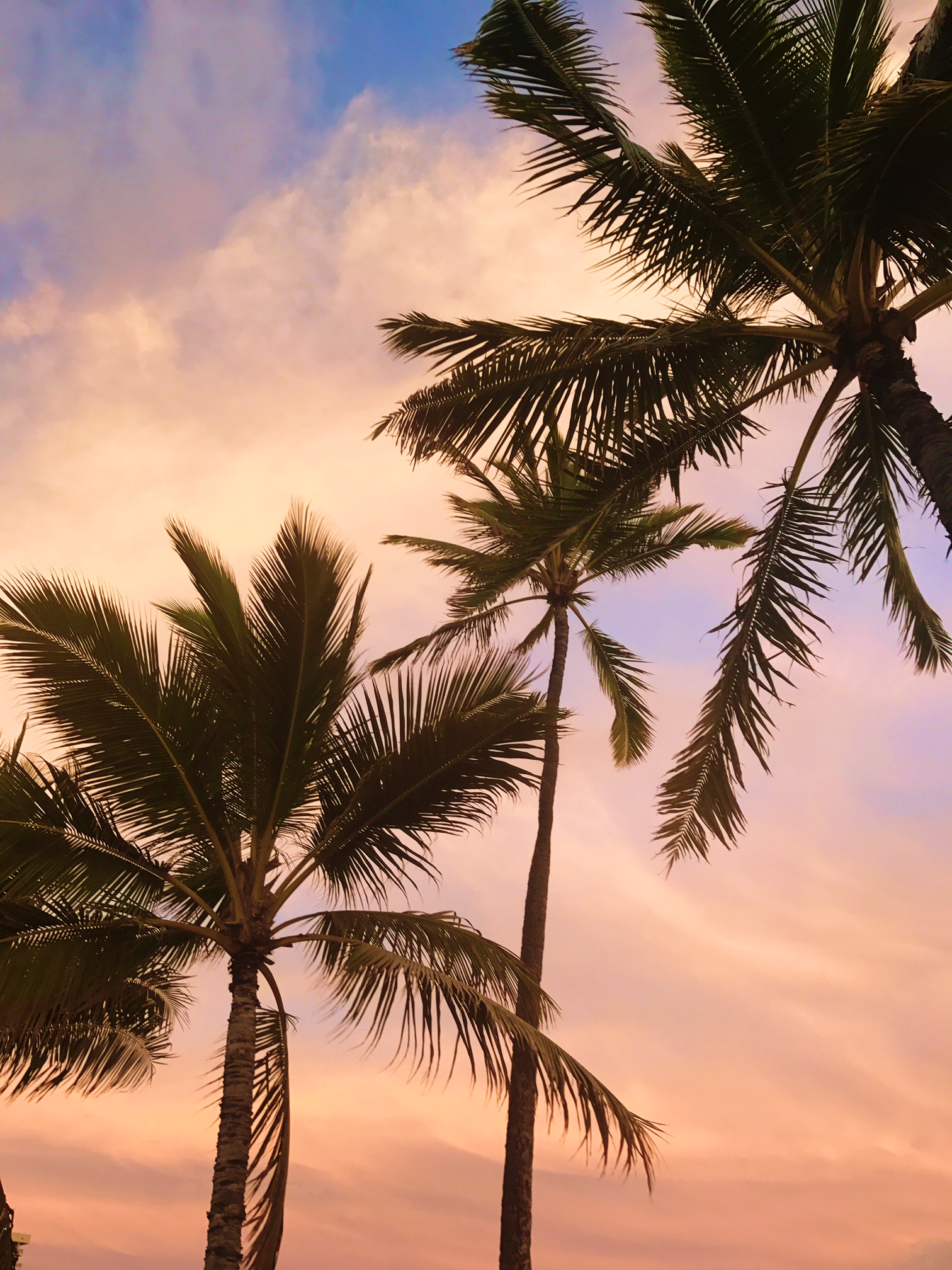 A Weekend Update - Honolulu Sunset - Communikait by Kait Hanson