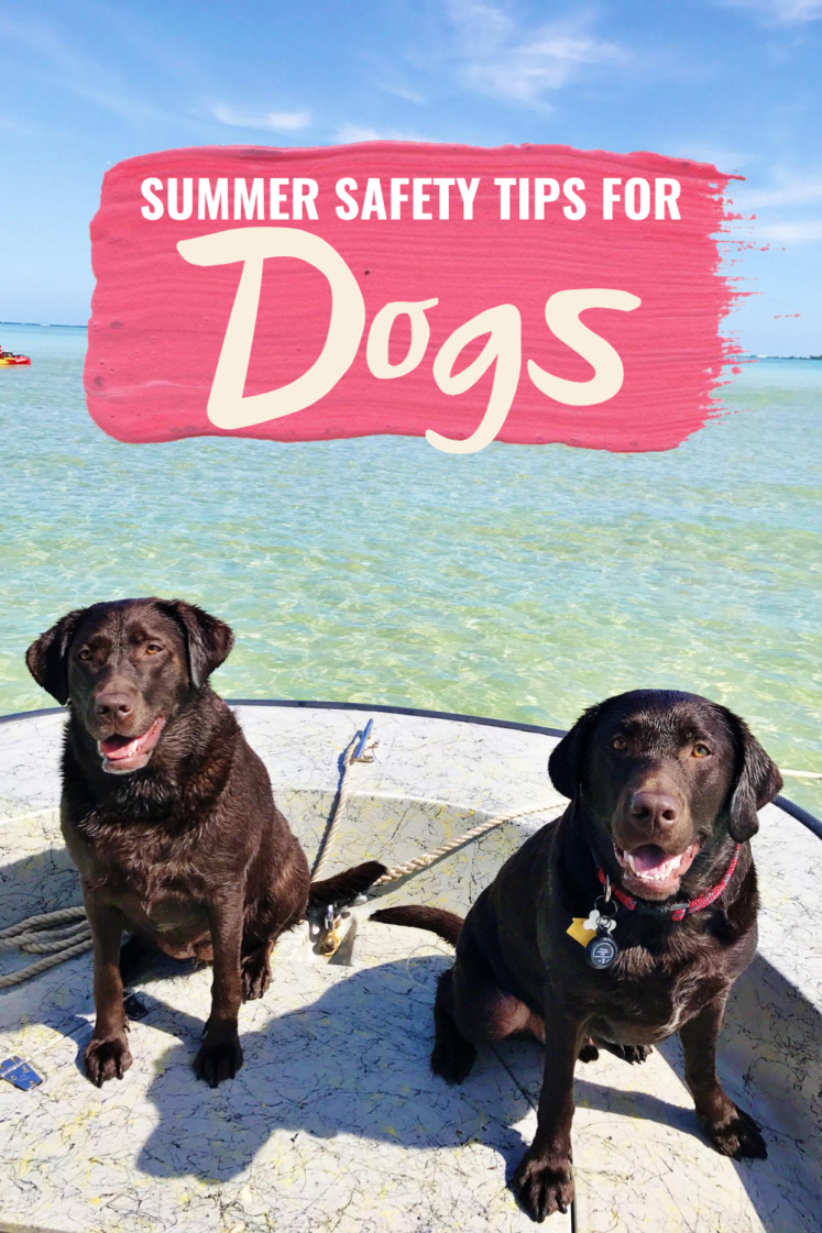 6 Summer Safety Tips For Dogs