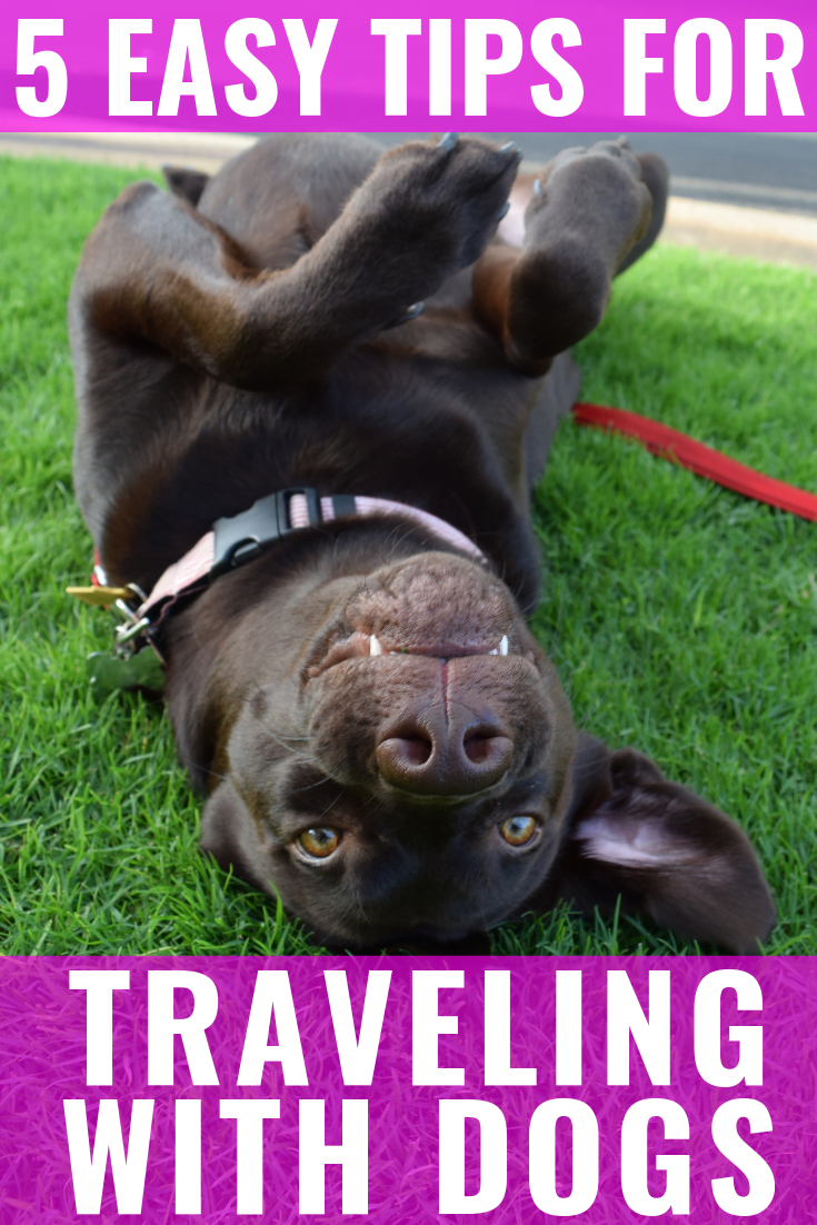 5 TIPS FOR TRAVELING WITH DOGS | 5 helpful pointers for traveling with your dogs so your trip is stress free for them + hassle free for you! - Traveling With Dogs - How to Travel With A Dog - Traveling With Your Dog - Guide To Traveling With Your Dog - Tips For Traveling With Pets - Traveling With Pets - Traveling With Your Pet