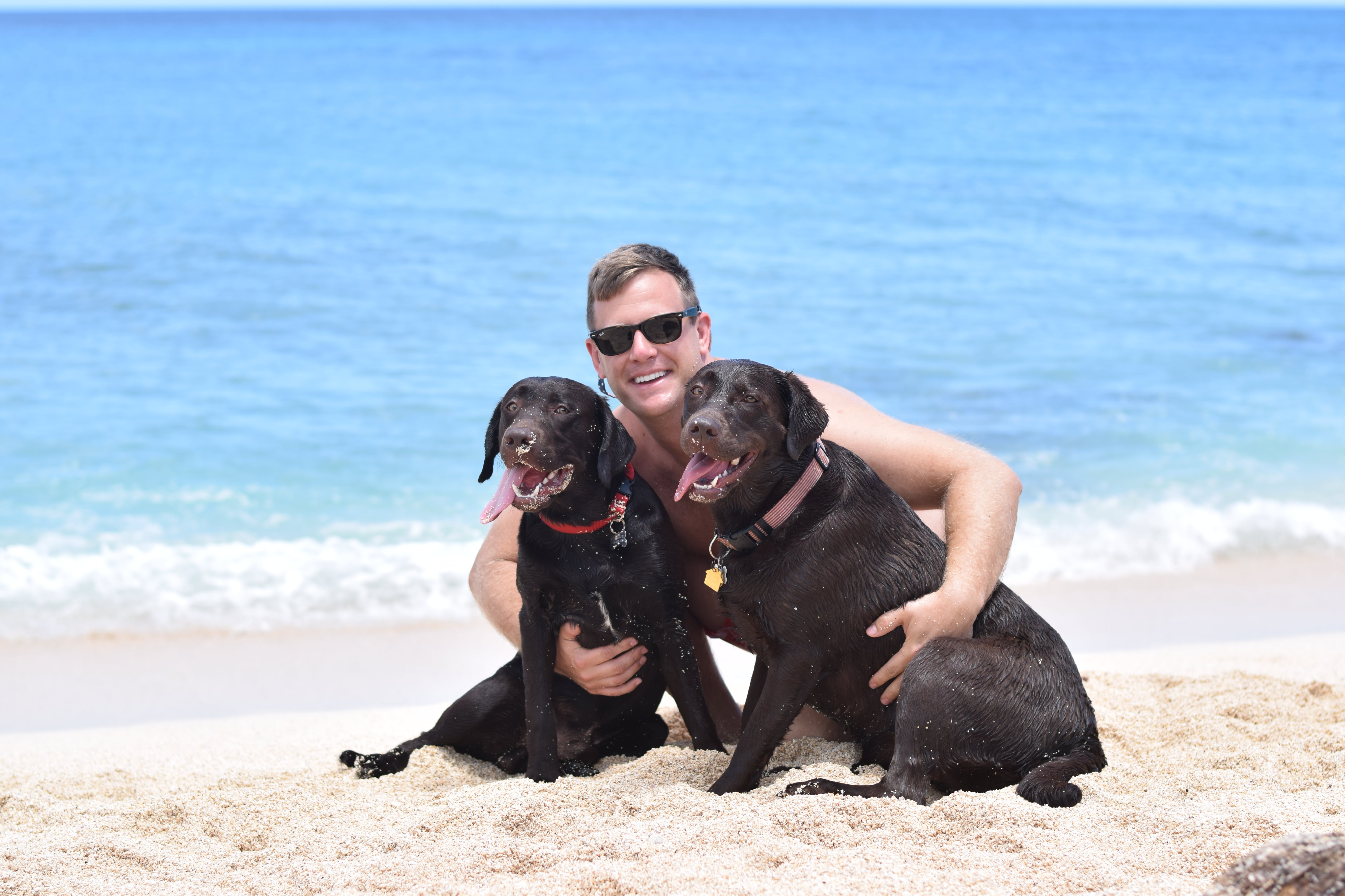 Dog Friendly Guide To Hawaii - Dog Friendly Beaches In Hawaii