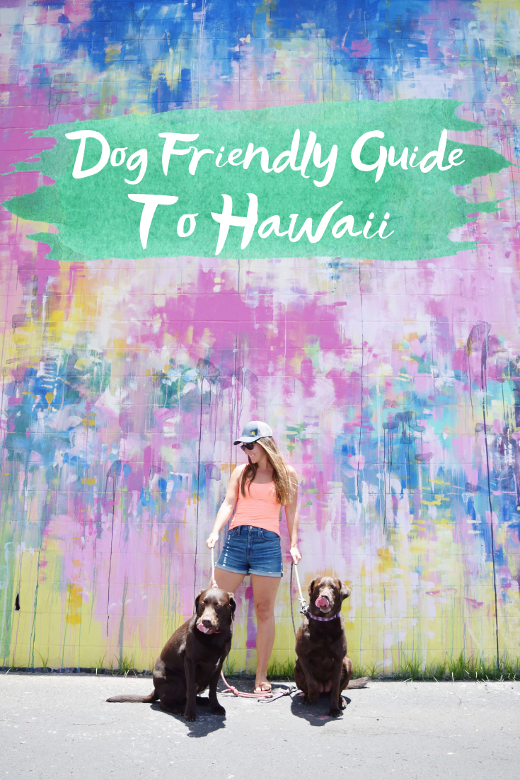 Dog Friendly Guide To Hawaii