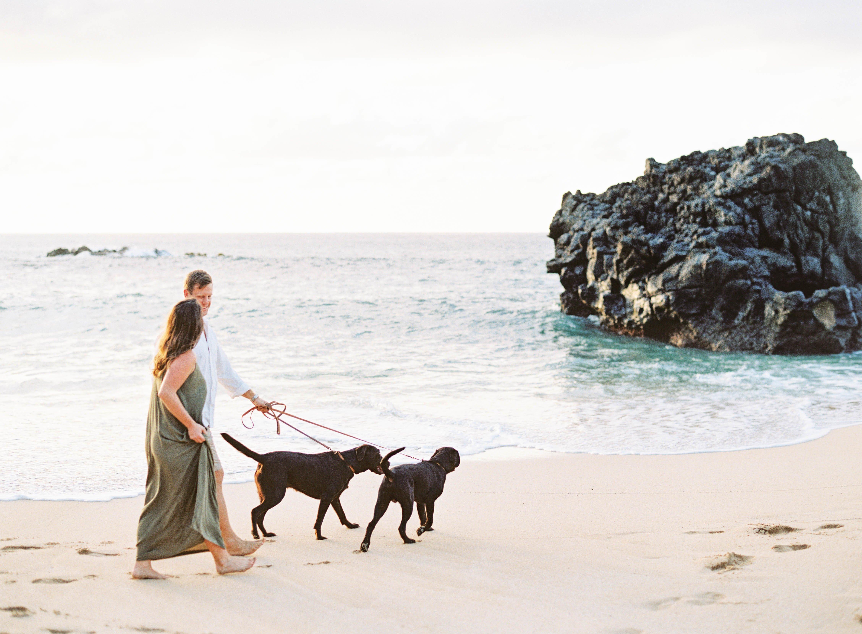 dog friendly guide to honolulu