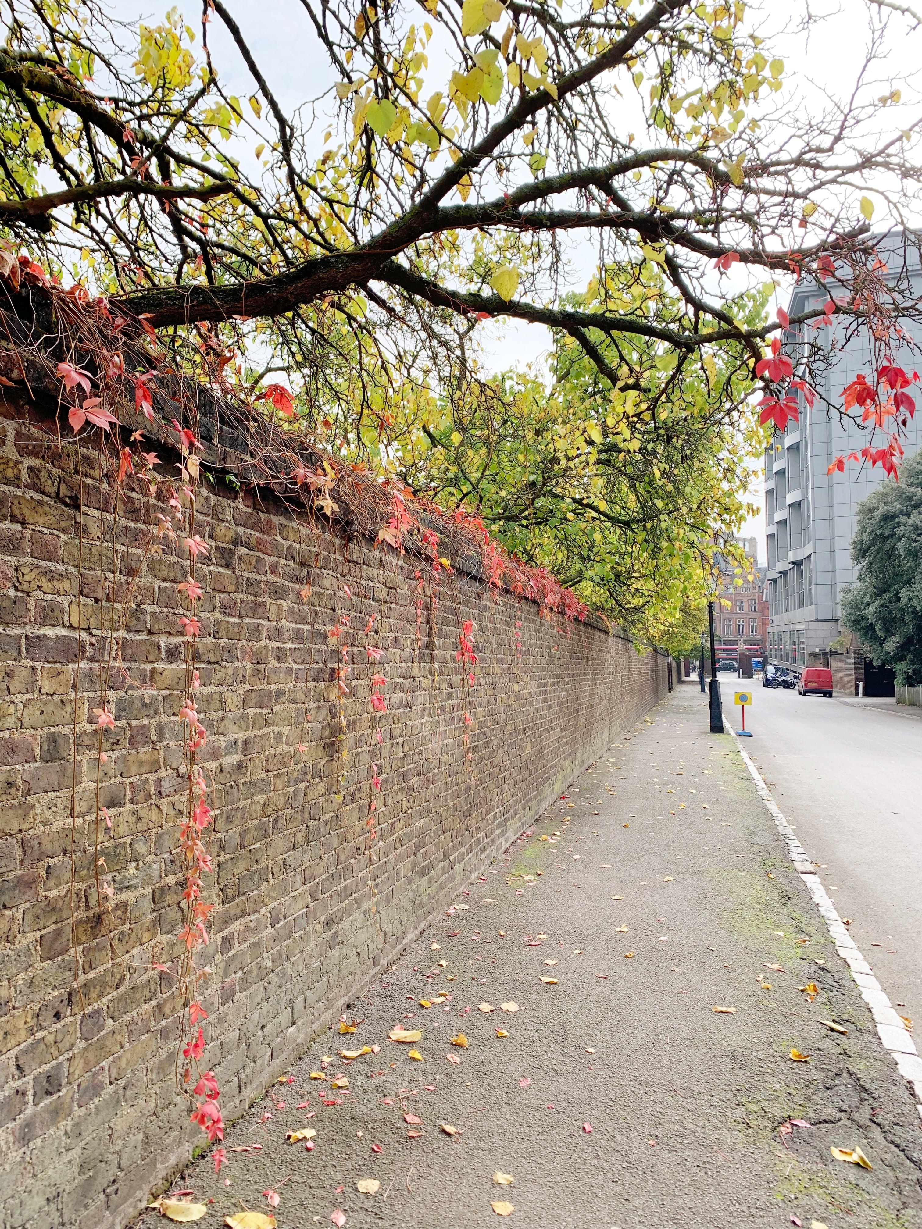 Fall foliage in London