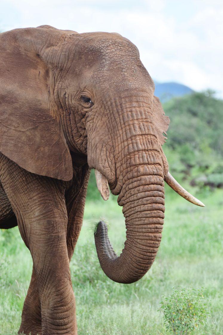 Kenya Travel: Photo Diary From Tsavo West National Park