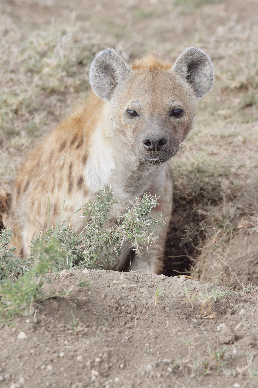 Kenya Travel: Photo Diary Of Maasai Mara -Photos to inspire a visit to the Maasai Mara Game Reserve, a national park in western Kenya | Maasai Mara - Masai Mara - Maasai Mara Game Reserve - Maasai Mara National Reserve Kenya - Mahali Mzuri - Masai Mara Kenya #kenya #africa #travel