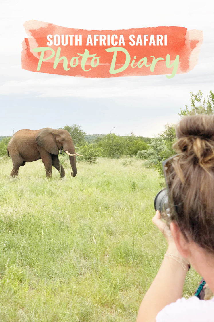 South Africa Travel: Greater Kruger National Park Photo Diary