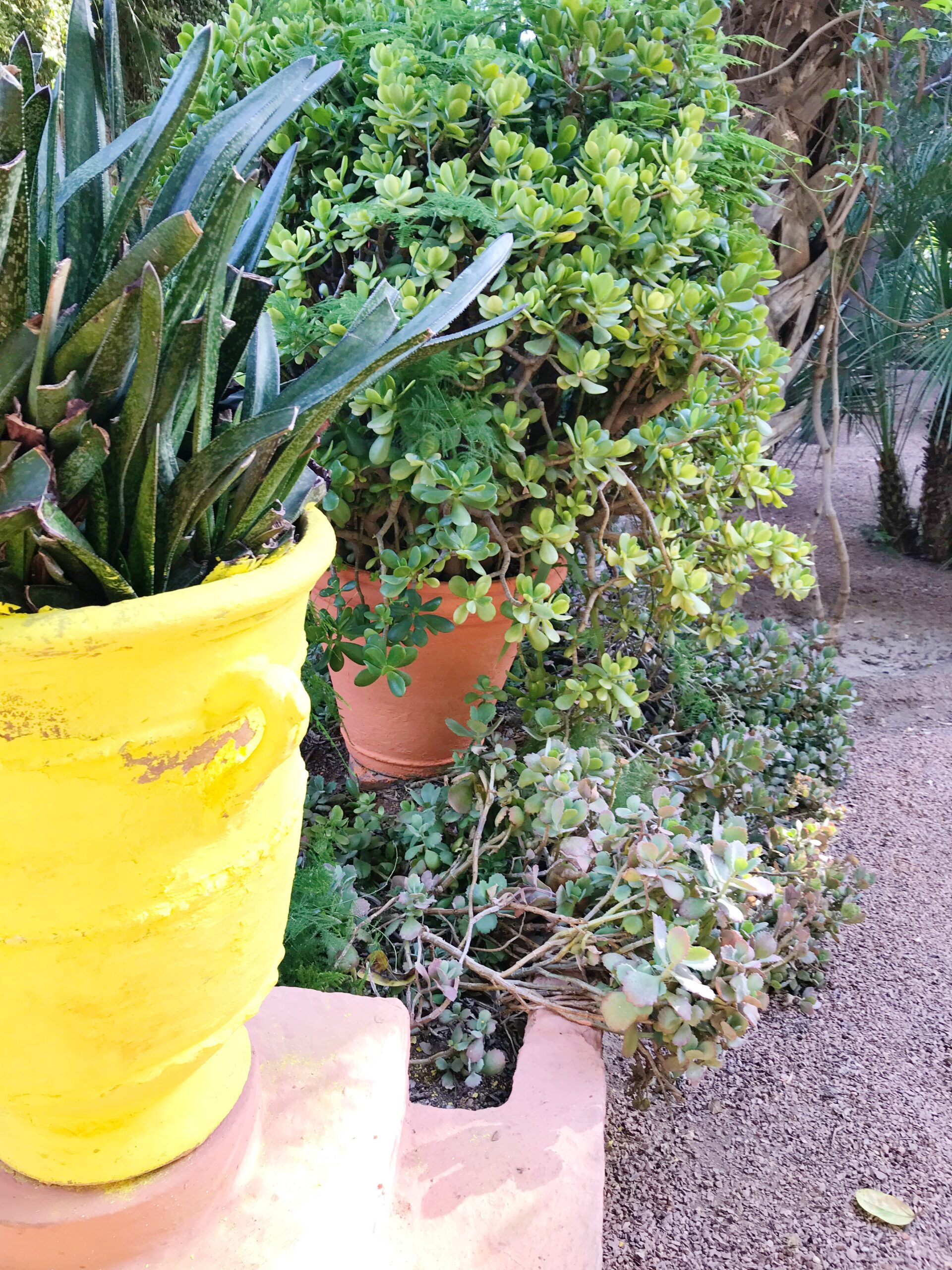 Yellow Garden Pot - Majorelle Garden