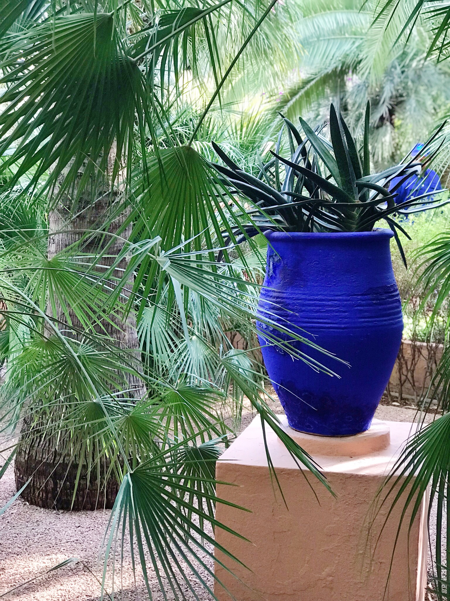 Tropical Palms - Majorelle Garden